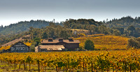 Autumn Vineyards-10