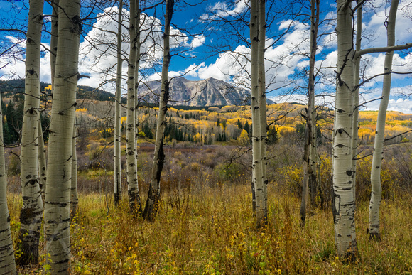 Beyond the Aspens - Kebler Pass