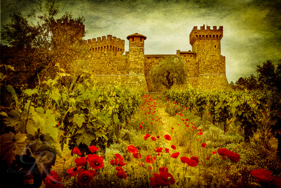 Poppies at Castelo di Amorosa